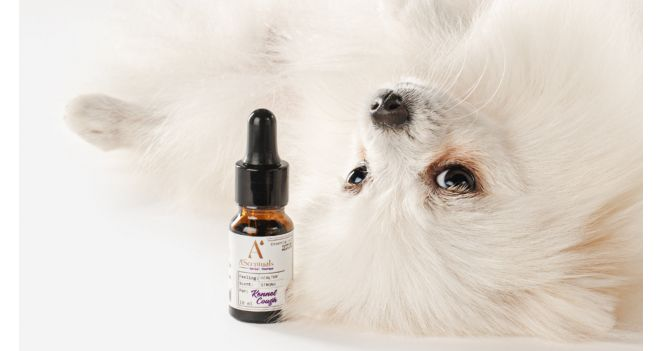 How is essential oil useful for pets?